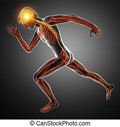 Human Nervous System - 3d Illustration of Human Nervous...