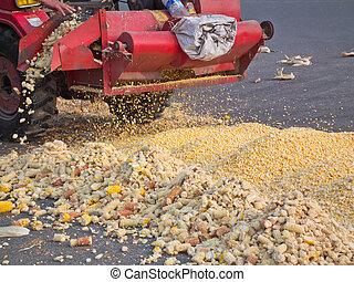 1, maíz, peine, encuadernación