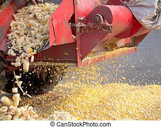 maíz,  2, encuadernación, peine