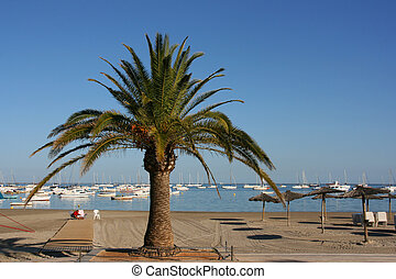 San Javier near Murcia, Spain. Beach, marina and palm tree.