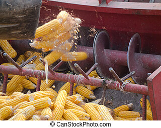 maíz, peine, encuadernación,  3