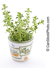 Fresh thyme on white background