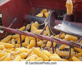 maíz, peine, encuadernación,  7