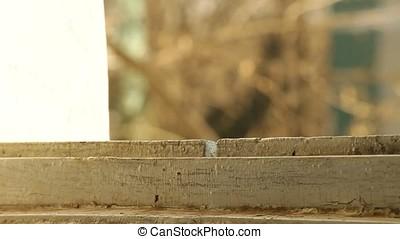 Blue Leaning on Window Case - Portrait of blue brunette...
