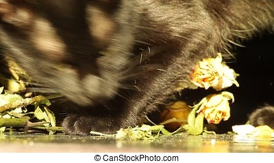 Eating Dried Up Rose Leaves Black Cat - Black cat eating...