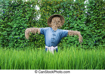 Thai scarecrow in the rice field, Thailand