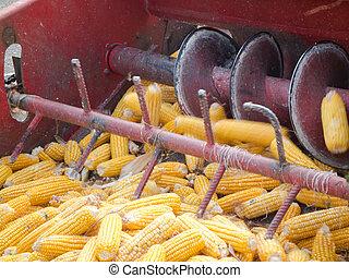maíz, peine, encuadernación,  4