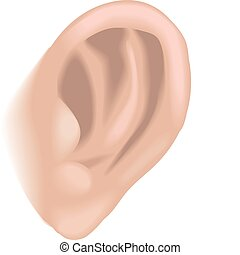 ear illustration - An illustration of a human ear, no meshes...