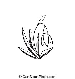 Snowdrop sketch icon - Hand drawn snowdrop symbol isolated...