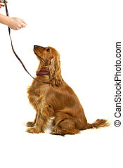 Dog Training - Teaching a dog to sit using food