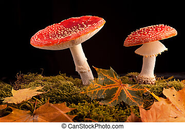 fly mushroom moss and autumn leaf - mushroom amanita...