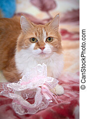 Ginger cat playing with a garter, and other wedding accessories items for the bride