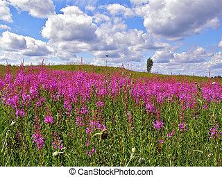 lilac flowerses on field