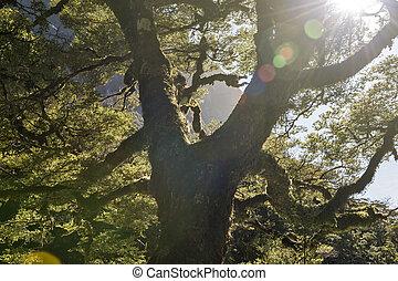 Sunlight rays passing through big tree