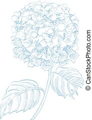 Hydrangea flower in pen and ink style