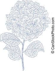 hydrangea - Hydrangea flower in pen and ink style