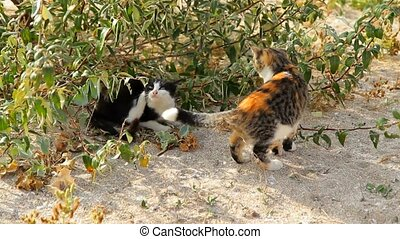 Cats on the sandy beach. - Two cats spending time outdoors
