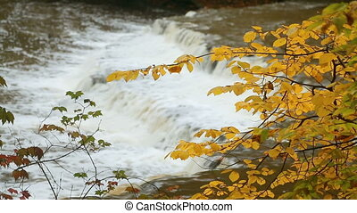 Waterfall Through Autumn Leaves Loop - Loop features the...