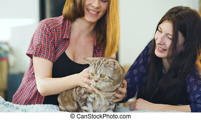 Two happy women friends lying in bed hug fat angry cat and have fun on bed