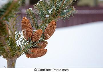 cones,  fir-tree, Inverno, fundo, ramo