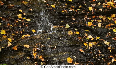 Leaves and Trickling Water Loop - Water trickles over a...