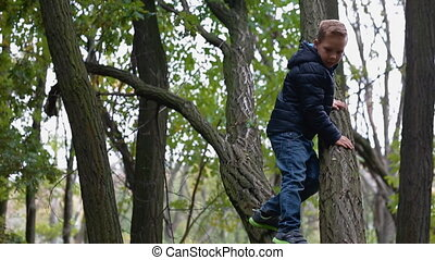 Little boy climb the old tree while mother waiting him....