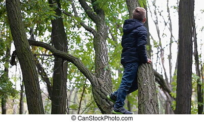 Little boy climb the old tree while mother waiting him.