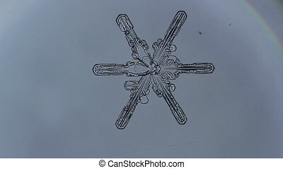 snowflake branches is disappear - snowflake melts into...