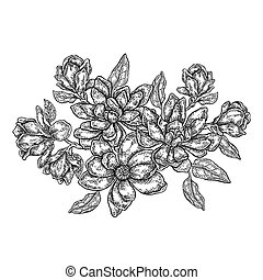 Hand drawn vector flowers. Vintage floral composition, spring magnolia flowers and leaves isolated on white background. Illustration in engraved style
