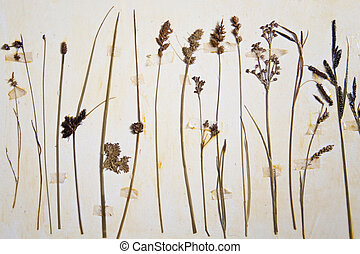 Herbarium - close up of a herbarium