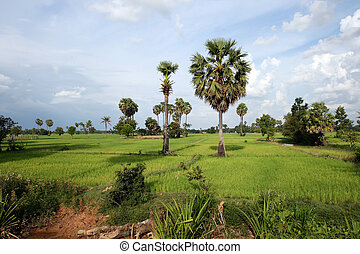 Cambodian landscape - Cambodian countrside near Siem Reap,...
