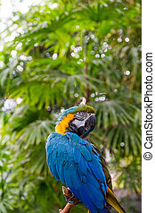 Blue and Yellow Macaw on Green
