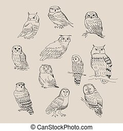 A set of cute different species of owls