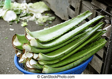 Aloe Vera on the market in Nha Trang