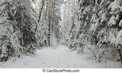 Snowy forest in the winter