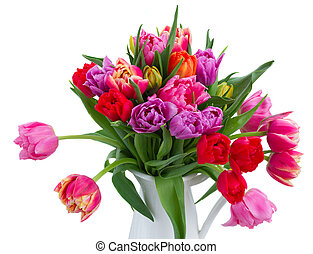 bouquet of tulips and daffodils - fresh pink, purple and red...