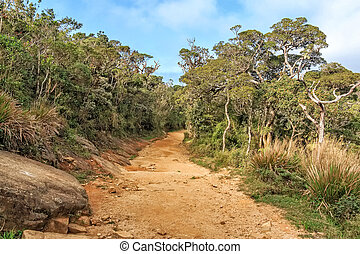 Scenic path in Horton Plains - Scenic view of savanna with...