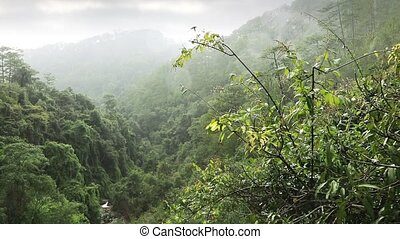 Tropical downpour in the jungle of central highlands Dalat,...