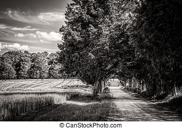Country Road (Sepia) - A small dirt road in Surry County,...