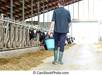 man with bucket walking in cowshed on dairy farm -...