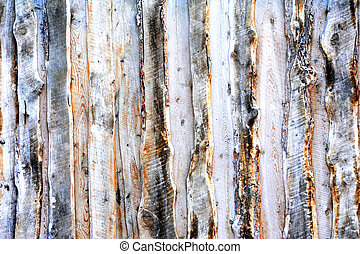 Knots and Bark - Background image is wooden boards cut from...