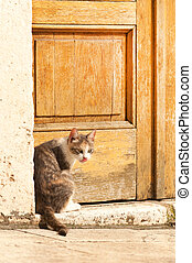 Old city of Sibenik - Domestic cat sitting by the entrance...