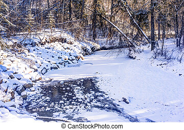 Mill Creek ravine, Edmonton, Alberta, Canada - Frozen creek...