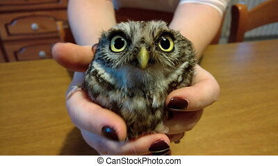 Rescued Owl - Woman caressing a rescued owl before to...