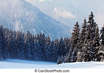 Snow covered trees - Winter landscape with snow covered...