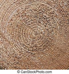square closeup of cut spruce tree trunk - square closeup of...