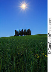 Cypress trees typical Tuscany landscape springtime at night...