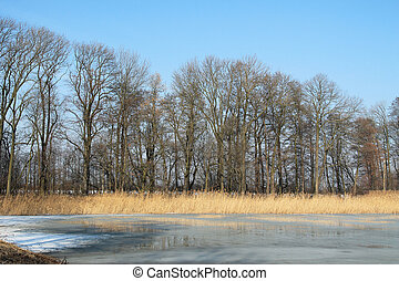 frozen pond in Poodri - frozen pond, yellow sear reed and...