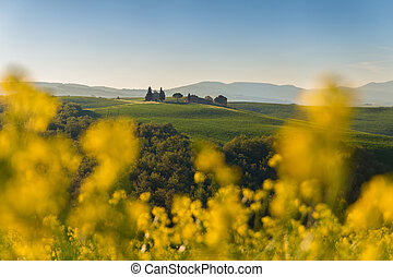 Tuscany landscape on the hill  with a little chapel of Madonna di Vitaleta