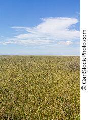 Swamp at Lagoa do Peixe lake - Vegetation at Swamp in Lagoa...